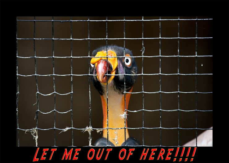 Let me out of here!!!