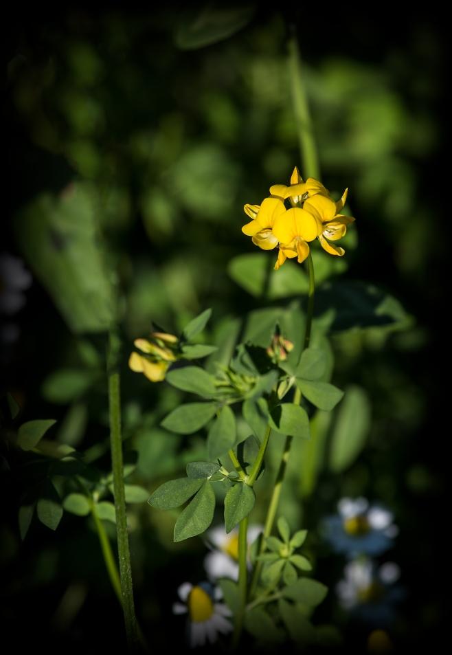 The Omelette Flower