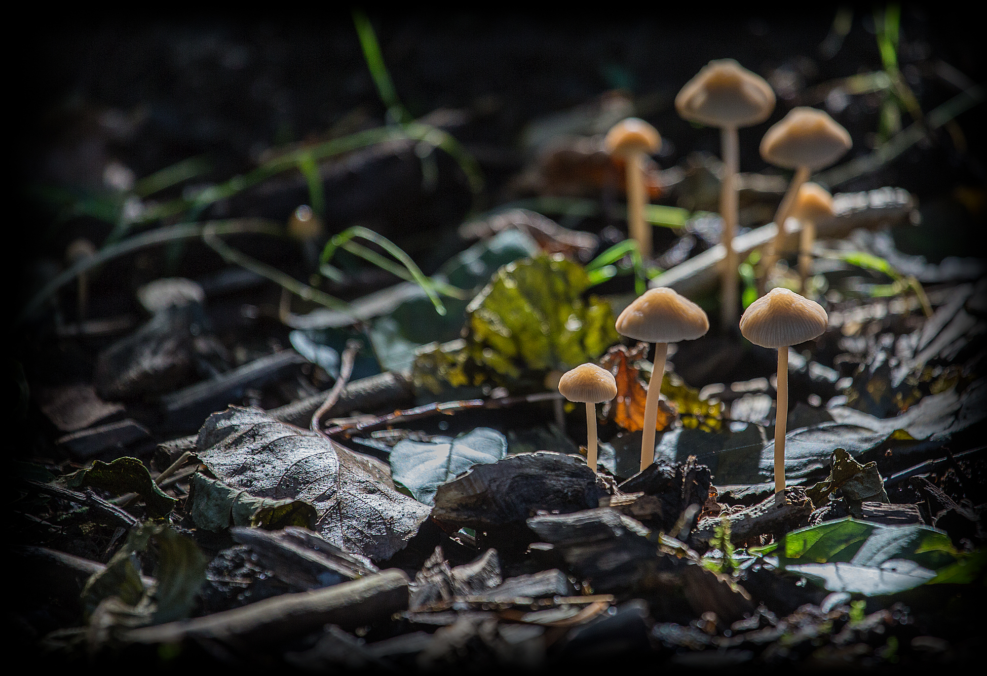 The Toadstools