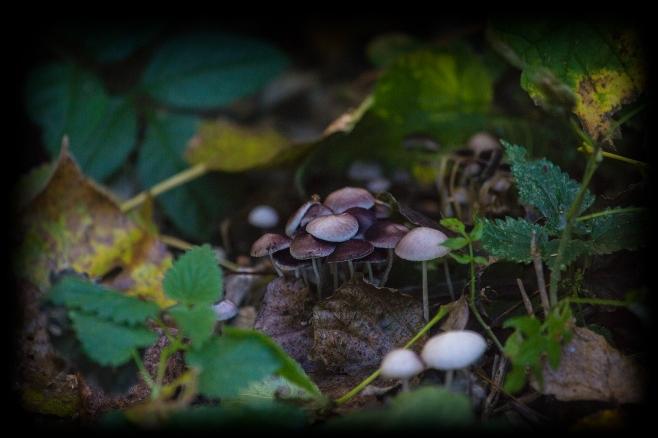 More Fungi (1)