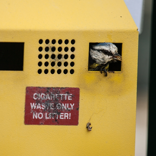 The Smoking Tit