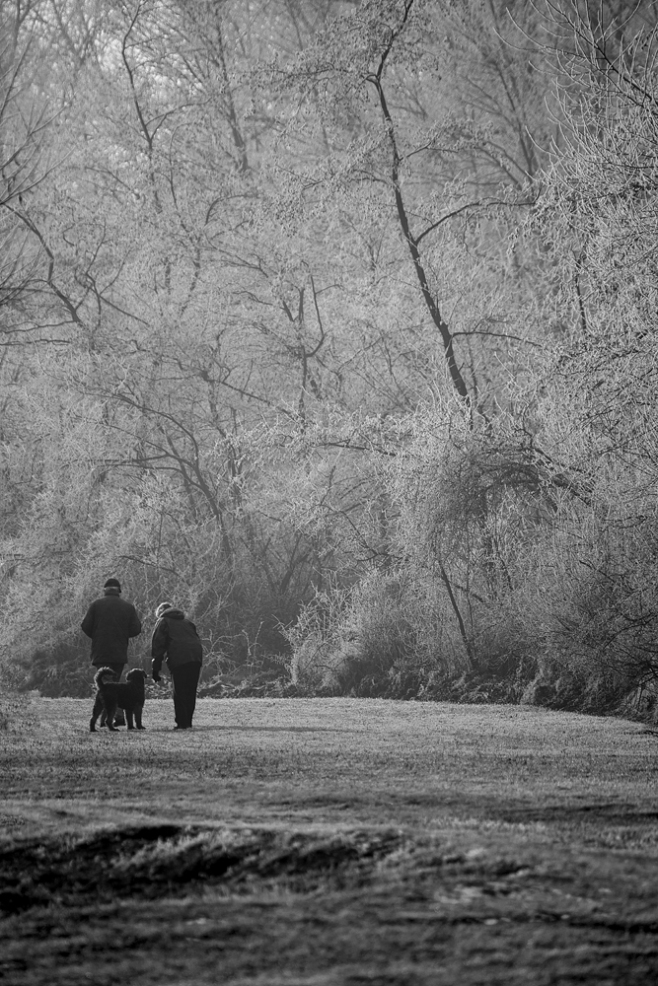 The Frost Dog Walk