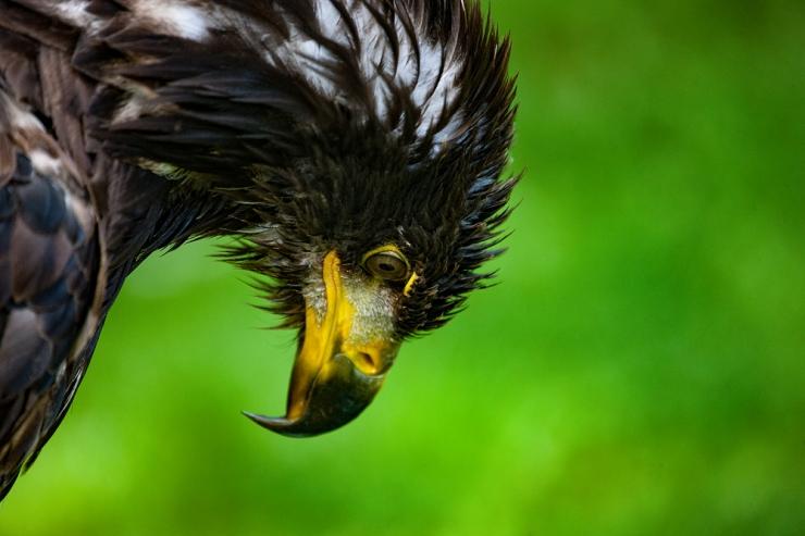 The Angry Bird (3)