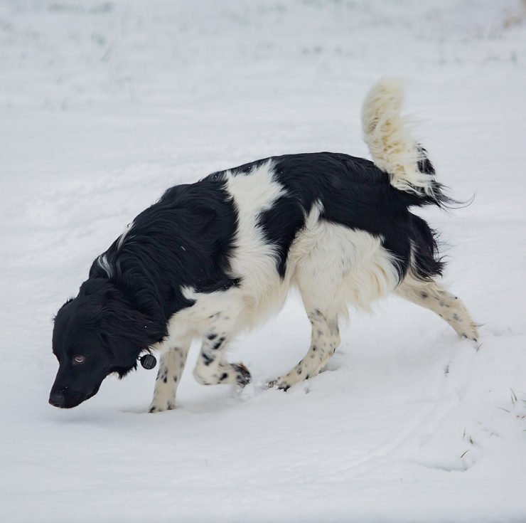 The Sniffer Dog Discovers Snow