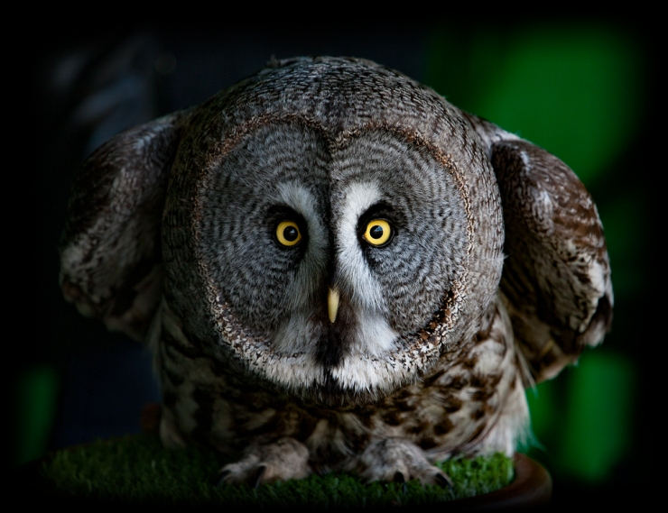 Angry Bird (1)