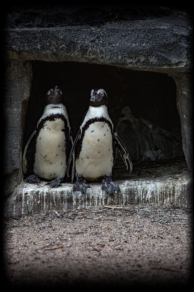 The Penguin Pals