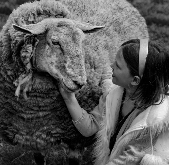 The Girl And Her Sheep
