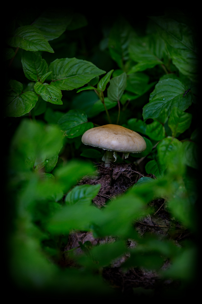The Lonely Fungus