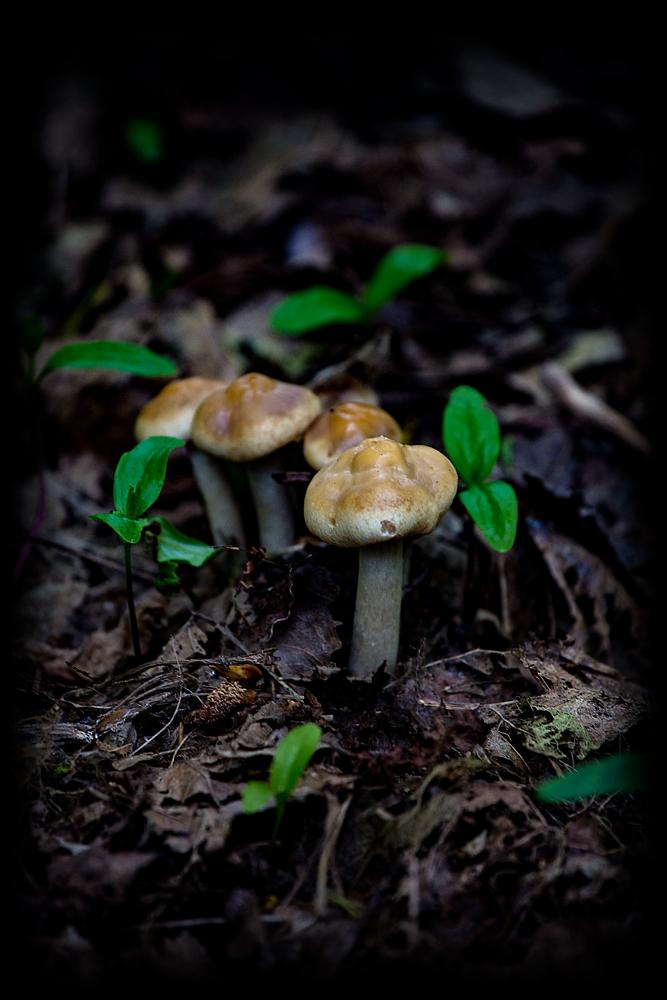 The Mini-Mushrooms