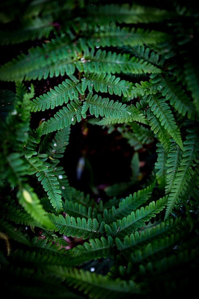 The Fern Vortex
