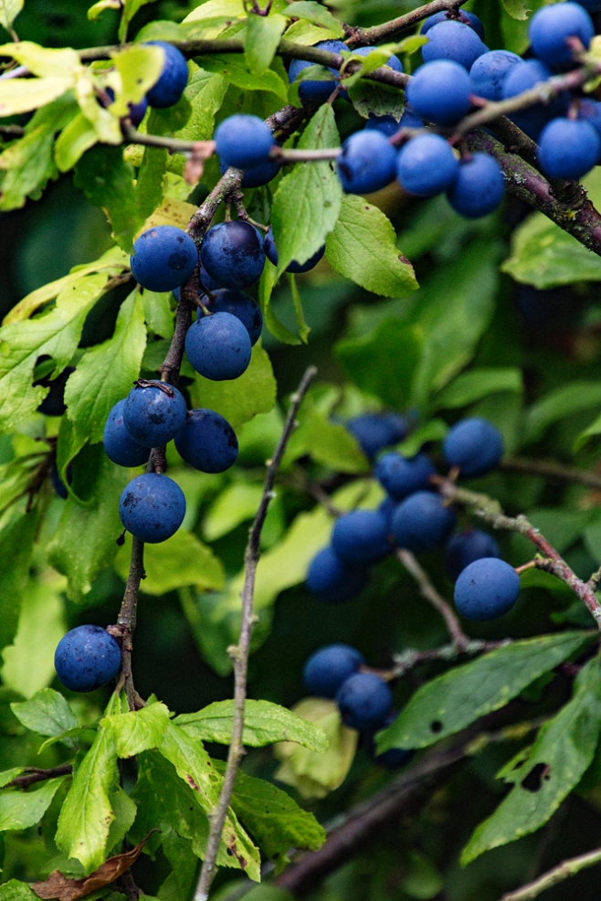 The Berries