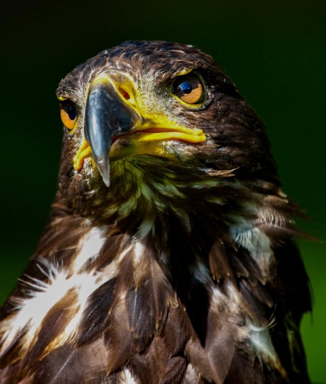 The Bird (2)
