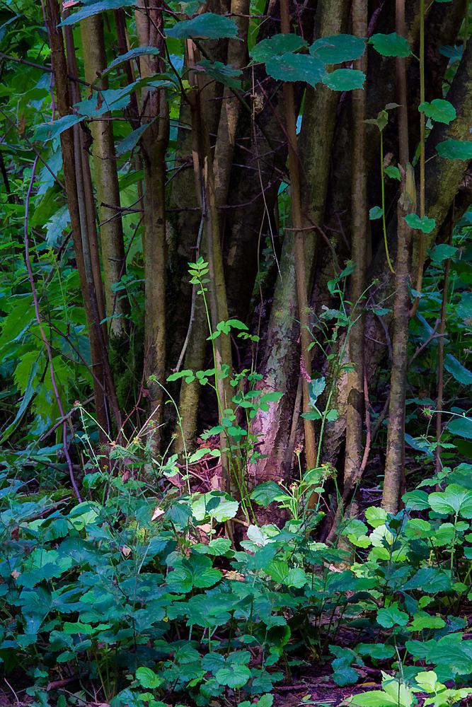 The Woods, Hemmeland