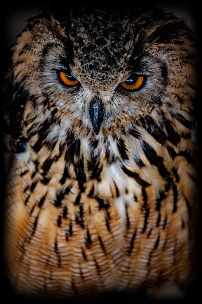 The Owl's Eyes