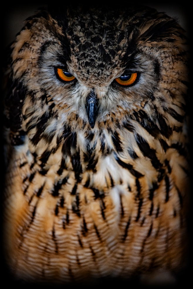 The Owl's Eyes