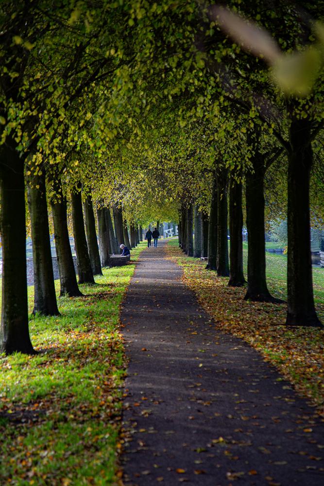 The Path - Richard Broom Photography