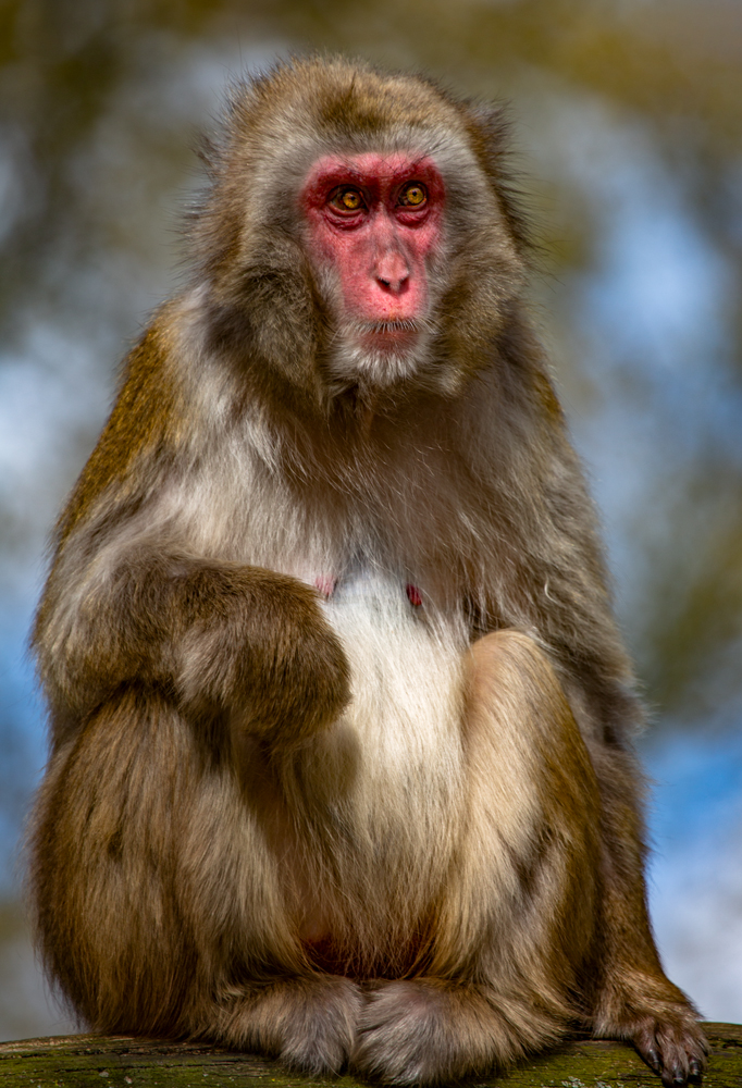 The Monkey - Richard Broom Photography