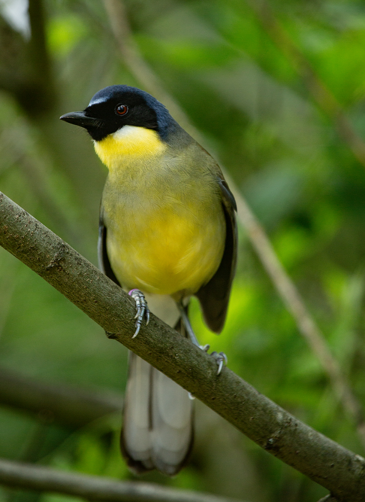 The Yellow Chicken - Richard Broom Photography