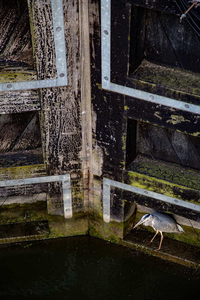 The Chicken and the Lock Gate - Richard Broom Photography