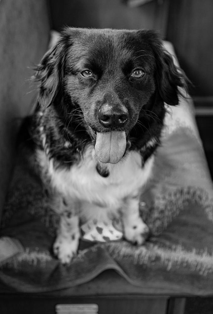 The Dog Wants A Walk! - Richard Broom Photography