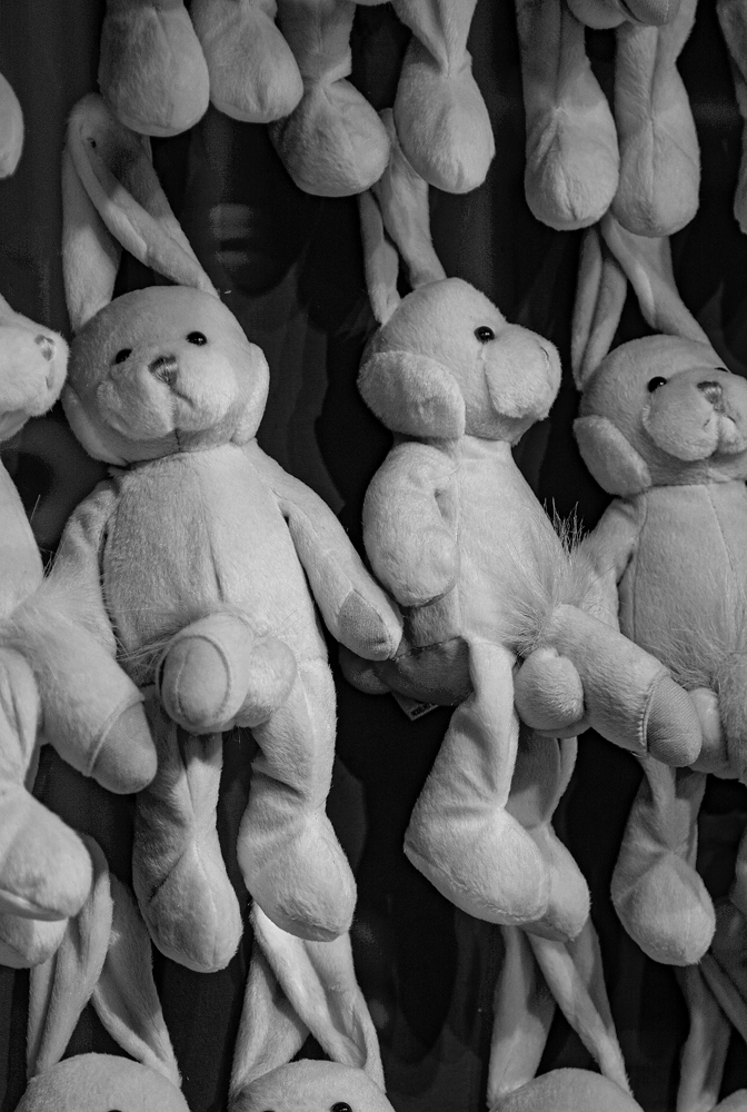 The Naughty Bunnies - Richard Broom Photography