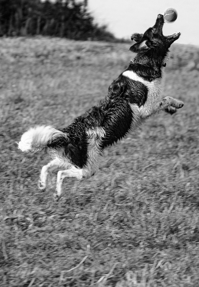 The Jumping Dog - Richard Broom Photography
