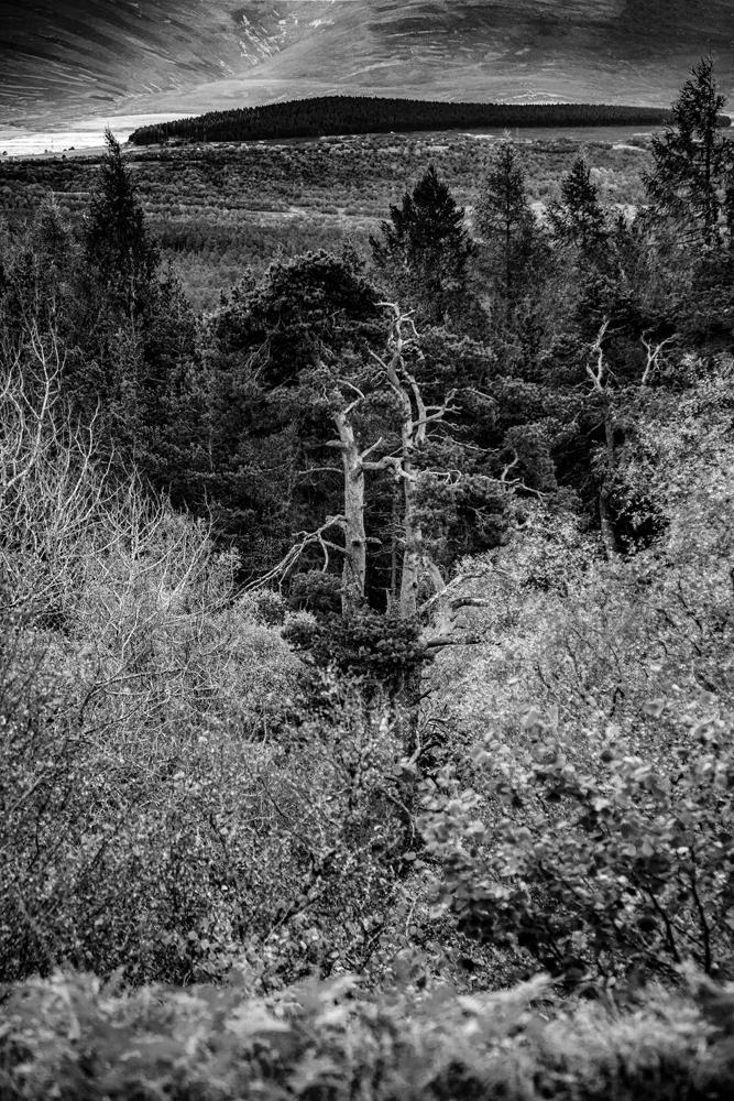 The Strange Tree Picture - Richard Broom Photography