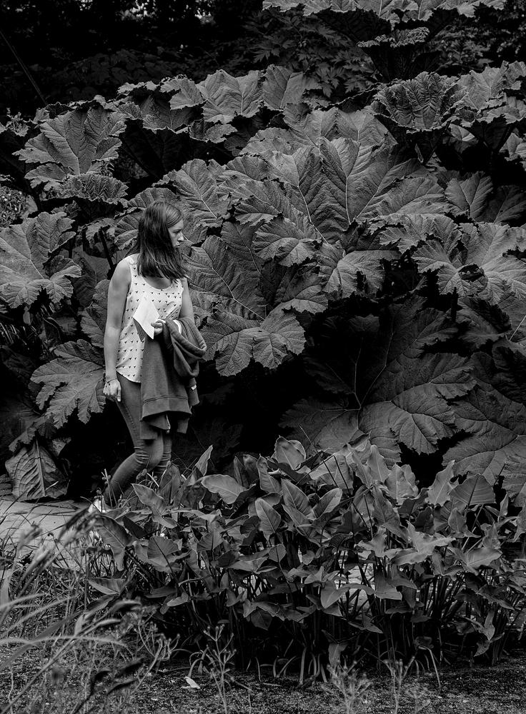 The Big Bush - Richard Broom Photography
