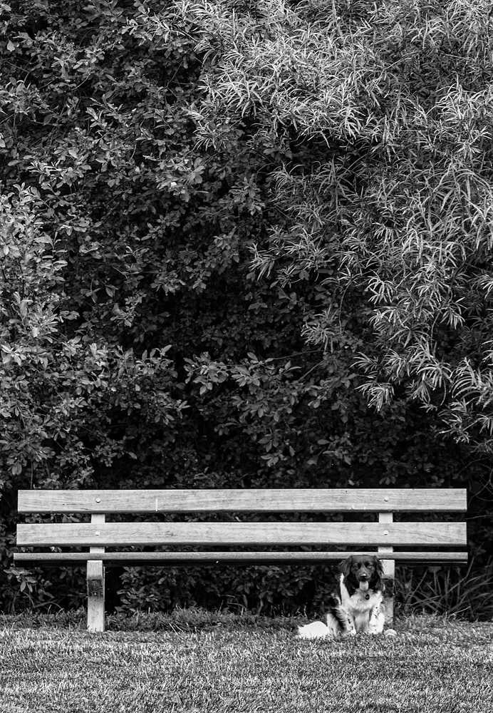 The Bench and the Dog - Richard Broom Photography