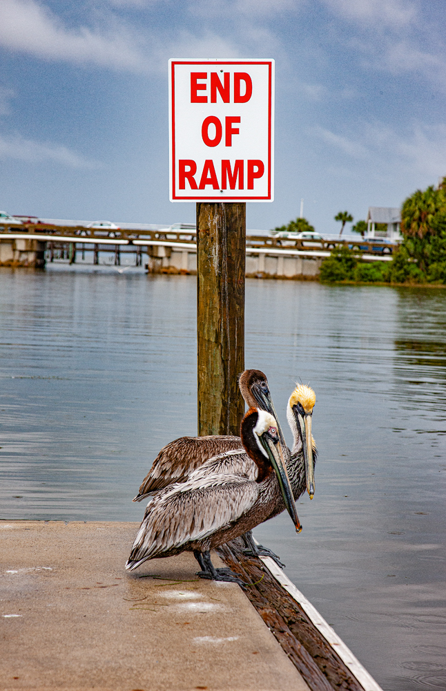 The Florida Chickens at the End of the Ramp - Richard Broom Photography