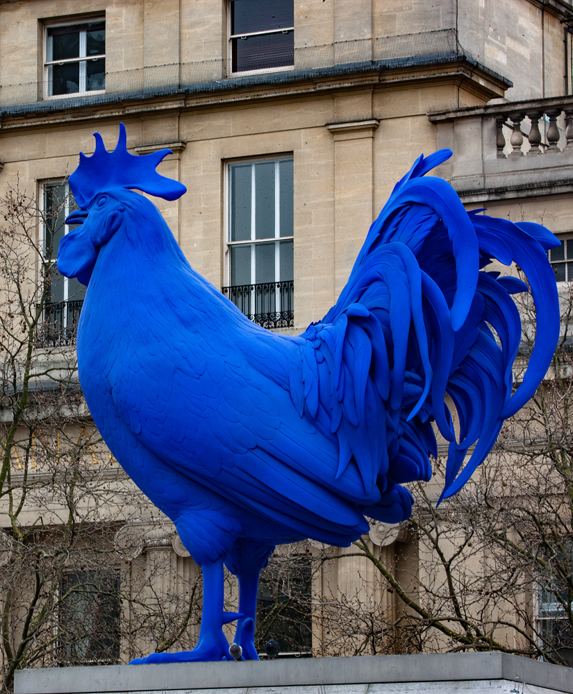 The Big Blue Cock - Richard Broom Photography