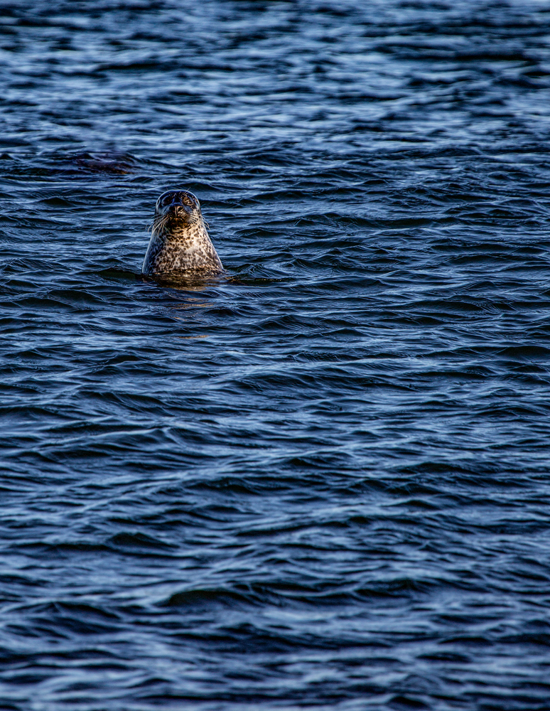 The Seal Watching Me Watching It - Richard Broom Photography
