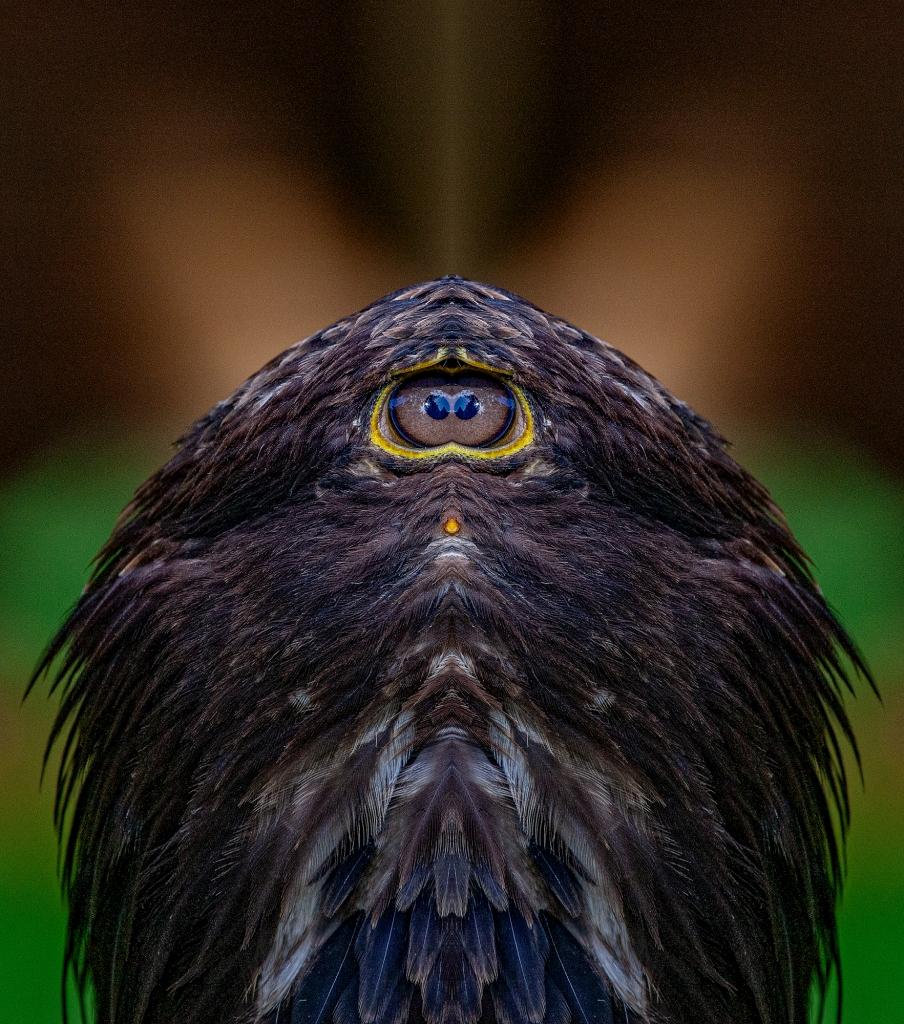 The Very Strange Chicken - Richard Broom Photography