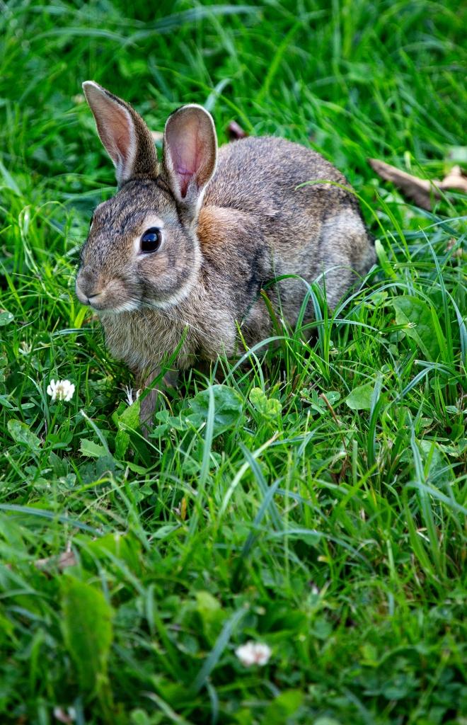 The Bunny Girl - Richard Broom Photography