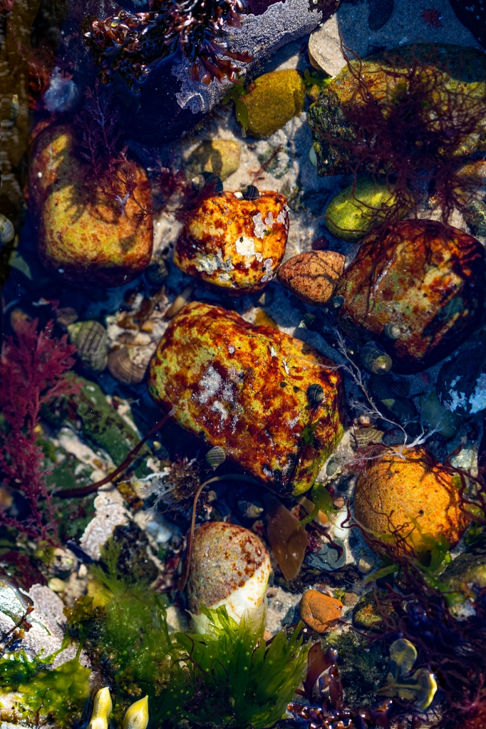 The Rock Pool Diaries (2) – The colourful rocks - Richard Broom Photography