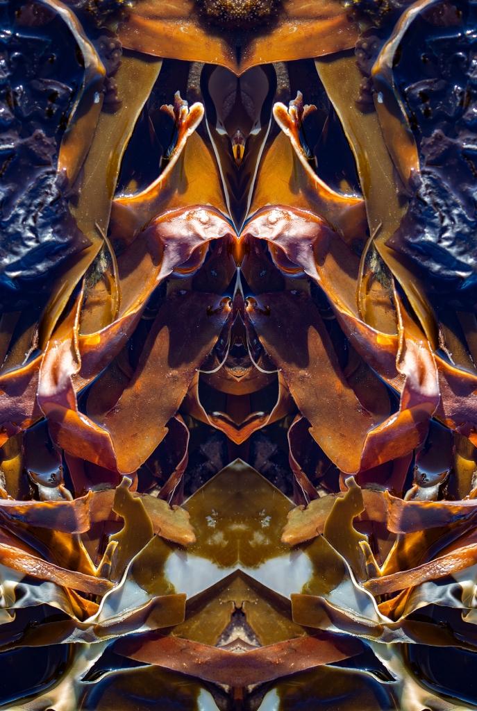 The Tagliatelle Seaweed Monster - Richard Broom Photography