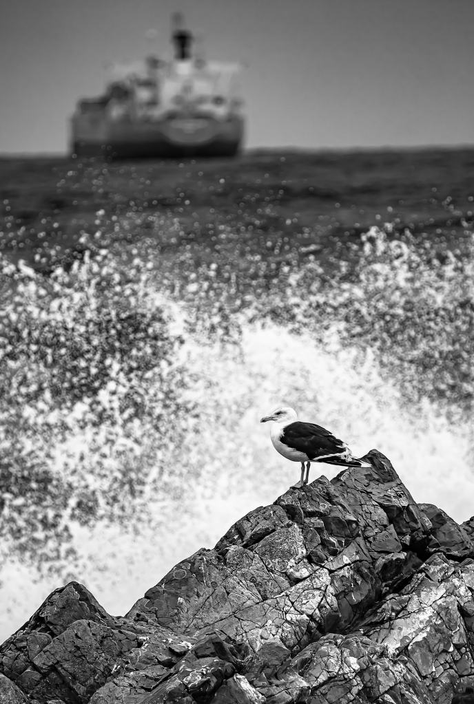 The Chicken on the Rock - Richard Broom Photography