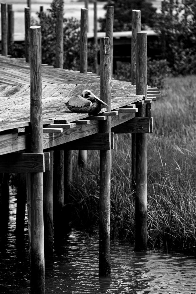 The Lonely Bird - Richard Broom Photography