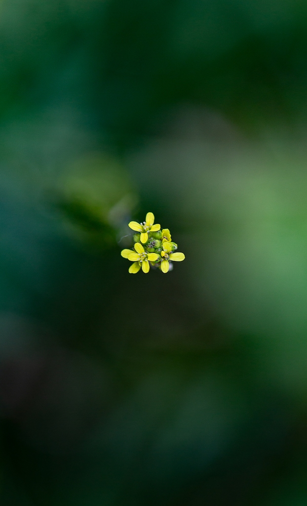 The Little Yellow Flowers - Richard Broom Photography