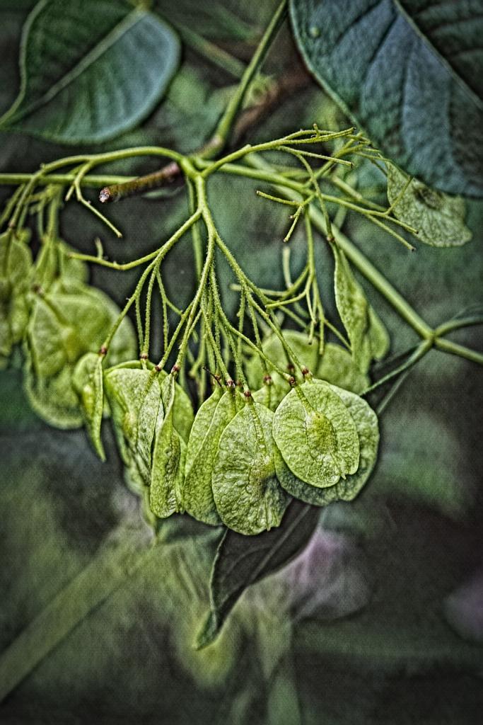 The Wicked Weeds (neuralised) - Richard Broom Photography