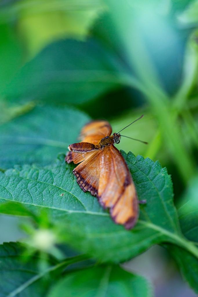 The Bug - Richard Broom Photography