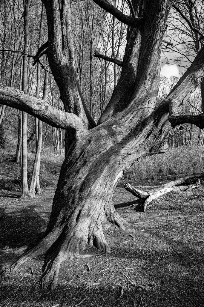 The Old and Twisted Tree