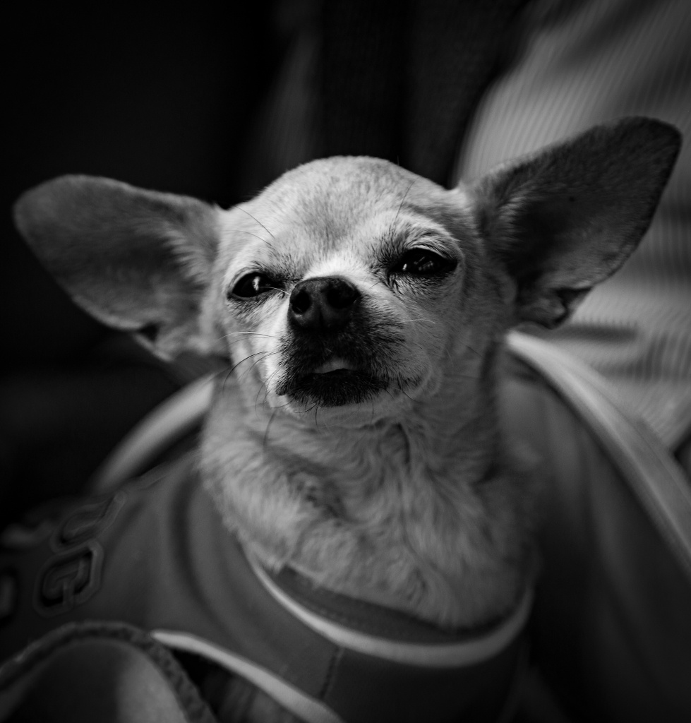 The Yoda Dog - Richard Broom Photography