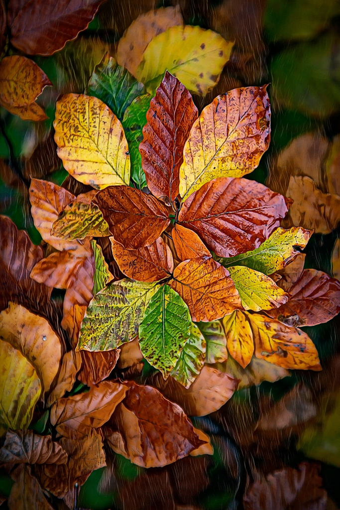 The Leaves (a splash of Photoshop's neural filter) - Richard Broom Photography
